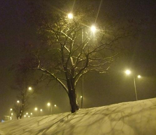 W przestrzeni nocy zimowej, fot. Stefania Pruszyńska, DSCF8740