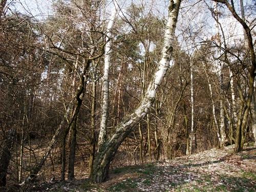3. Pod batutą słońca z jesienią gra wiosna, fot. Stefania Pruszyńska, DSCF9544