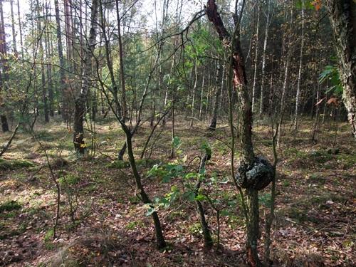 3-w-lesie-kolo-obrzycka-fot-stefania-pruszynska-dscf4055