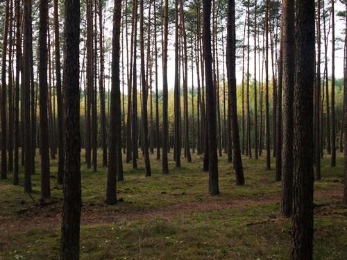 4-w-lesie-kolo-obrzycka-fot-stefania-pruszynska-dscf4062