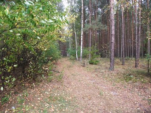 8-w-lesie-kolo-obrzycka-fot-stefania-pruszynska-dscf4138