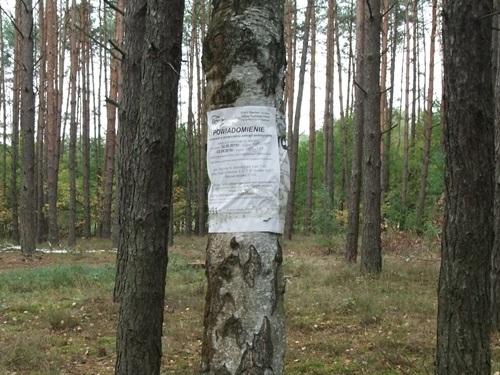 9a-w-lesie-kolo-obrzycka-fot-stefania-pruszynska-dscf4134